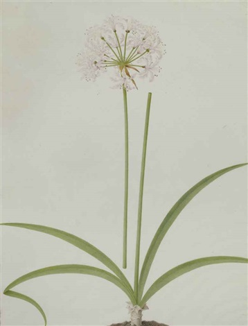 Fleur Dail By Nicolas Robert On Artnet