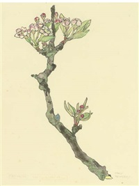 apple blossom by mary newbery sturrock