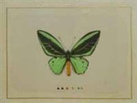 papillon vert by la roche laffitte