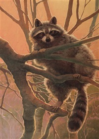 racoon by francis lee jaques