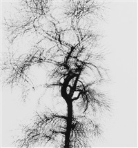 multiple exposure tree, chicago by harry callahan