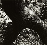 the tree 108 by aaron siskind