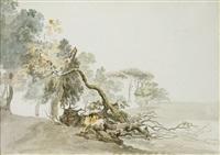 études d'arbres et de troncs by carlo labruzzi