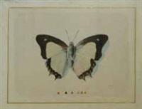 papillon blanc et noir by la roche laffitte