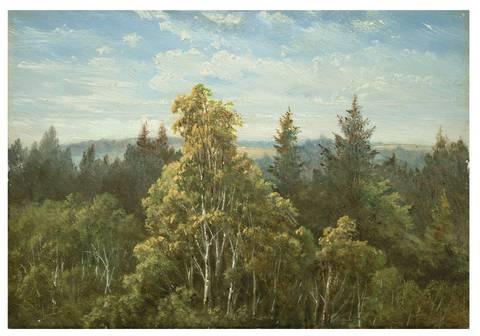 bewaldeter abhang bei pillnitz by carl gustav carus