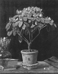 rhododendronbusch in blumentopf by frederick-georg andersen