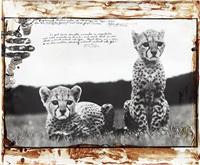 cheetah cubs at mweiga nr. nyeri, kenya for the end of the game by peter beard