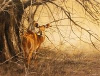 bushbuck by kim donaldson