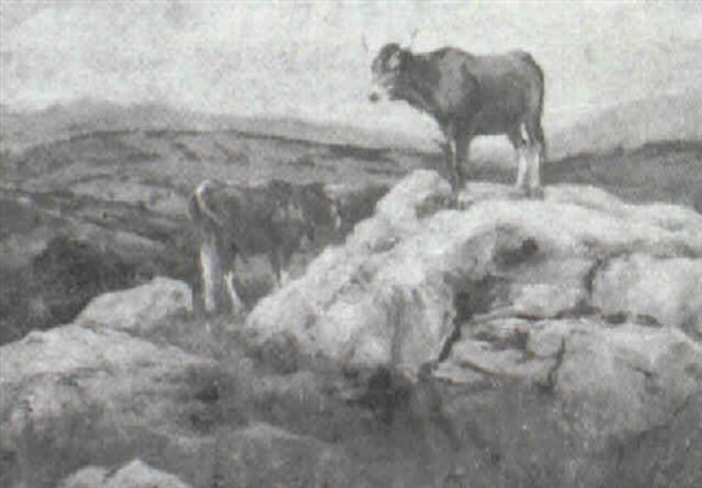 vacas de campo asturias by serafín avendaño