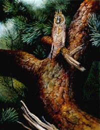 drowsing away in daylight - long eared owl by david morrison reid henry