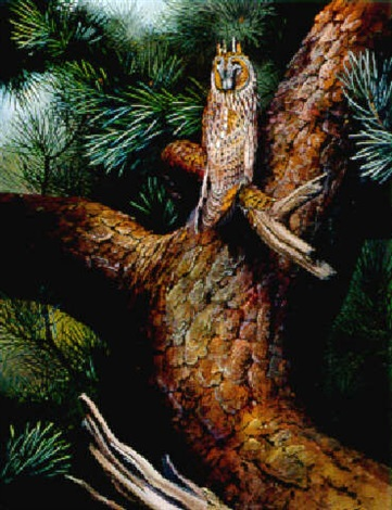 drowsing away in daylight long eared owl by david morrison reid henry