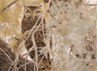 eagle owl in an acacia tree by kim donaldson