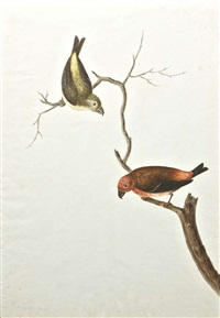 male and female crossbills on branches by mary battersby