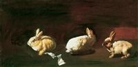 nyulak (rabbits) by tibor csernus