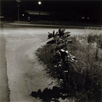 summer nights (longmont, colorado) by robert adams