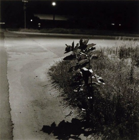 summer nights longmont colorado by robert adams