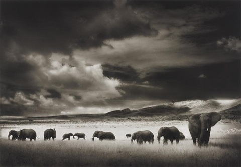 elephant herd serengeti by nick brandt