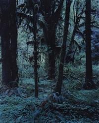 quinault no. 20 by yoshihiko ueda