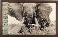 tsavo north on the athi tiva, circa 150 lbs.- 160 lbs. side bull elephant, february by peter beard