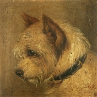 the rough coated terrier (after geo armfield) by edward aistrop