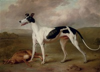 a prize greyhound in an extensive landscape by philipp reinagle