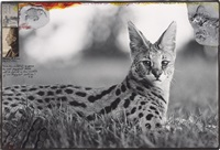 tsavo natl. park/ for the end of the game/ last word from paradise by peter beard