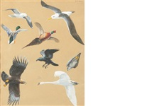 lesser black-backed gull, black-browed albatross, mallard, ring-necked pheasant, raven, peregrine falcon, golden eagle, mute swan (+ ratites, a pair, and a volume of the children's britannica, volume 2; 3 works) by david morrison reid henry