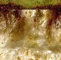 entre el muro y las hojas by ivan loboguerrero