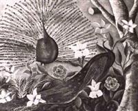 paons royaux by gesner abelard