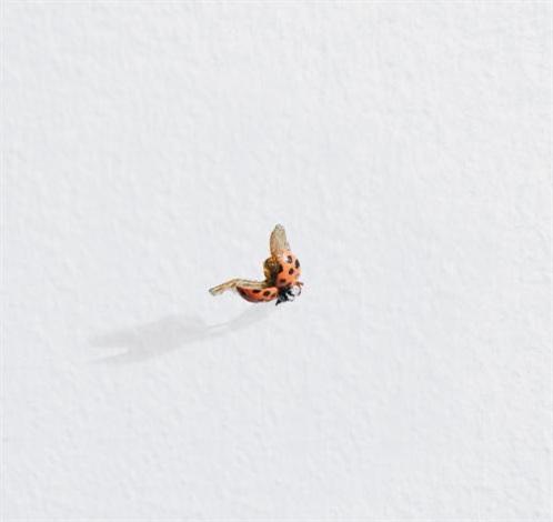 untitled (ladybug) by tom friedman