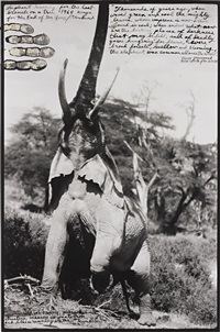elephant reaching for the last branch on a tree, kenya by peter beard