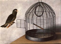 parrot out of its cage by cornelis (bilcius) biltius