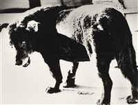 stray dog by daido moriyama