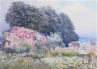 bank of rhododendrons by edith helena adie