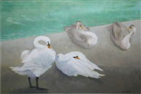 swans by barbara warren