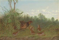 a quail feeding her chicks by howard l. hill