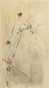 spider on grasses by edwin john alexander