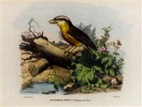 atlante zoologico popolare, opera compilata sui più recenti lavori di zoologia italiani e stranieri - ornithological studies by giovanni boschi