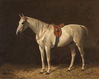 a saddled white horse in the stable by emil volkers