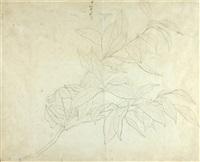 foliage (study) by john ruskin