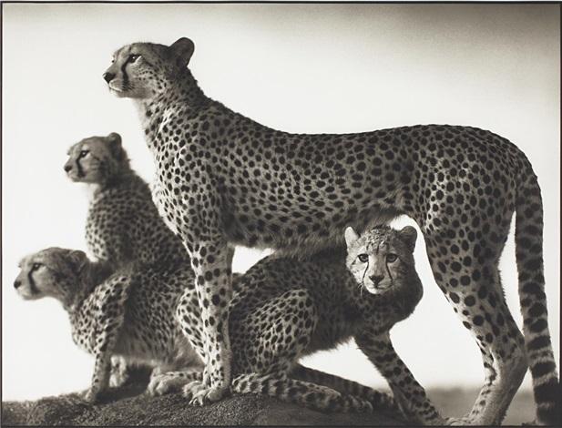 cheetah and cubs maasai mara by nick brandt