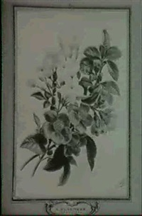 aq bouquet of jasmine and camellia by arnoldus bloemers