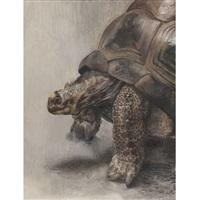 turtle by erik bart andriessen