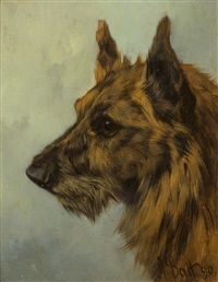 scottish terrier head study by arthur batt