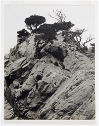 lobos california by edward weston