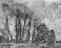 poplar trees in autumn, borgneuville, france by walter griffin