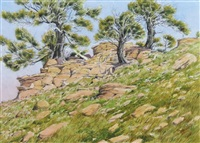 limber pines on a rocky outcrop by j. stanford perrott