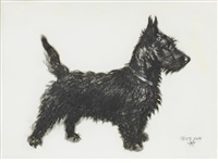 a scottie by cecil charles windsor aldin