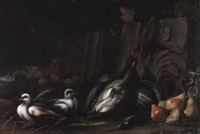 stilleben mit taube by giacomo farelli