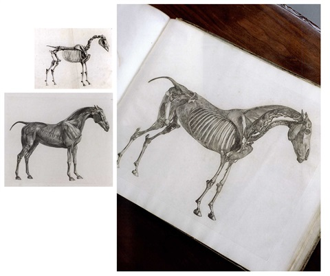 The Anatomy Of The Horse Book W24 Works Text By George Stubbs On Artnet
